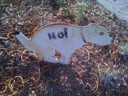 No! Dog
