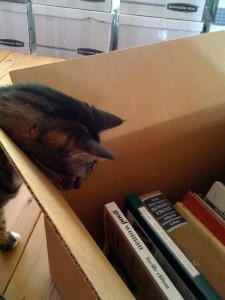 Feline packer