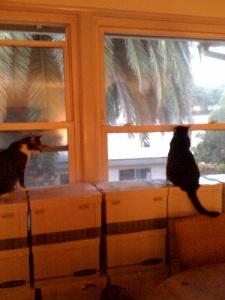 Feline packing inspectors