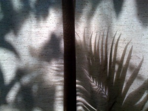 Shadows on Curtain