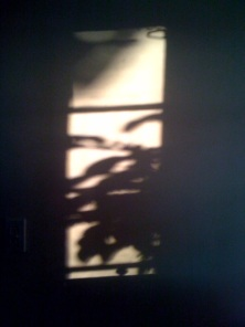 Shadows on wall