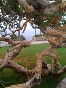 Tree Laguna