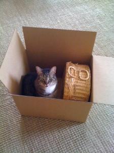 Zoe in Box
