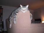cat hanging on