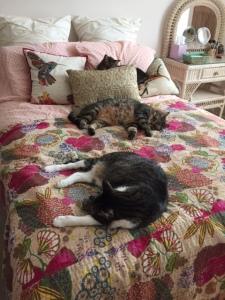 Dewey, Lily, Zoe